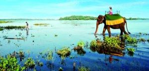 Sri Lanka - Best Tropical Destination to Visit in January