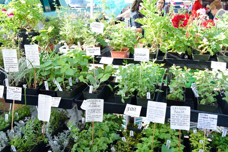 Tuesday San Diego County Farmers Markets - Pacific Beach Farmers Market