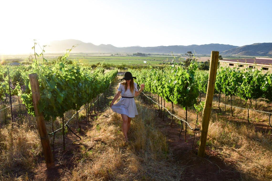 Baja California Guadalupe Valley Wineries