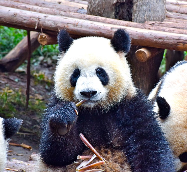 San Diego Bucket List - San Diego Zoo