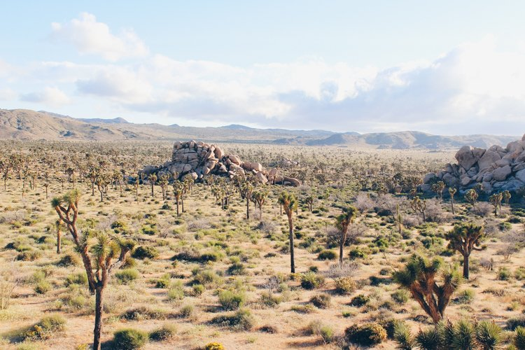 Hidden Valley - Joshua Tree National ParkJoshua Tree National Park