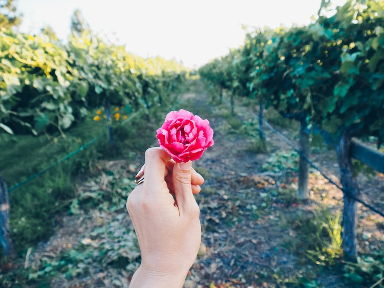 Wiens Family Cellars - Temecula Valley Wineries