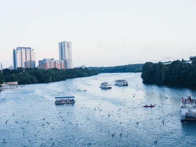Congress Bridge Bats - Things to do in Austin, Texas